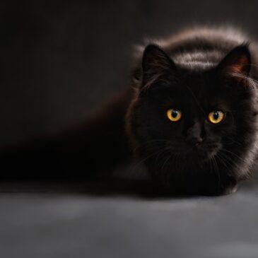 Superstitions & Conditionals