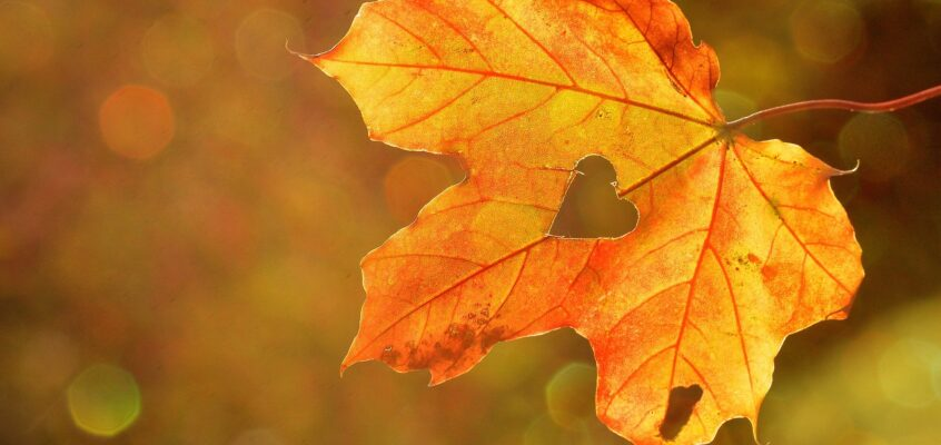Autumn is coming!